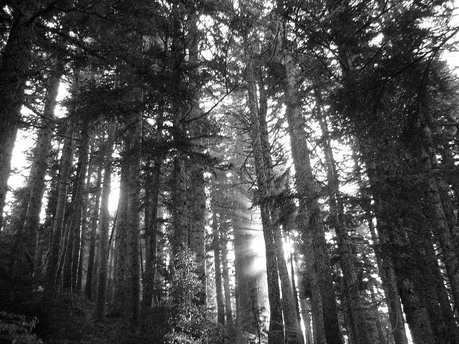 Landscape Photograph - Light by Mark Camp
