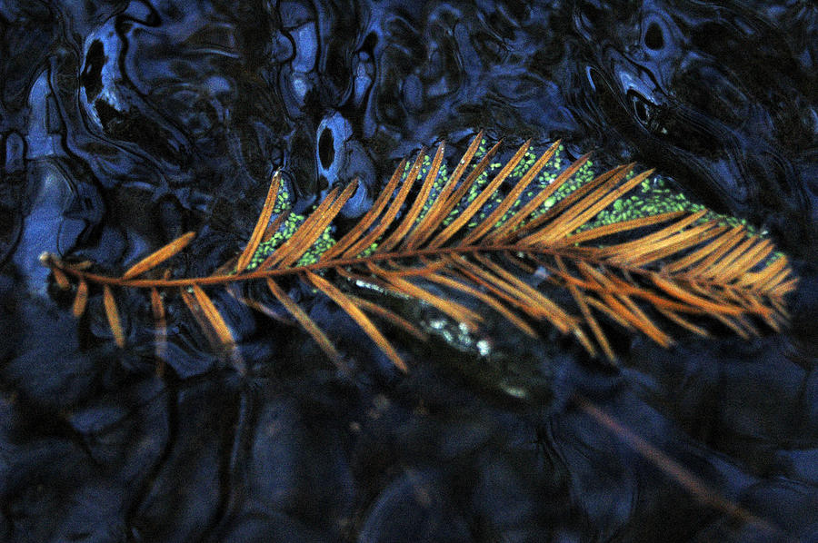 Water Photograph - Light Music  by Deborah Gallaway