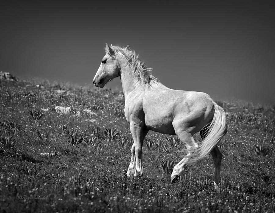 Beautiful Photos Photograph - Light Mustang 1 Bw by Roger Snyder
