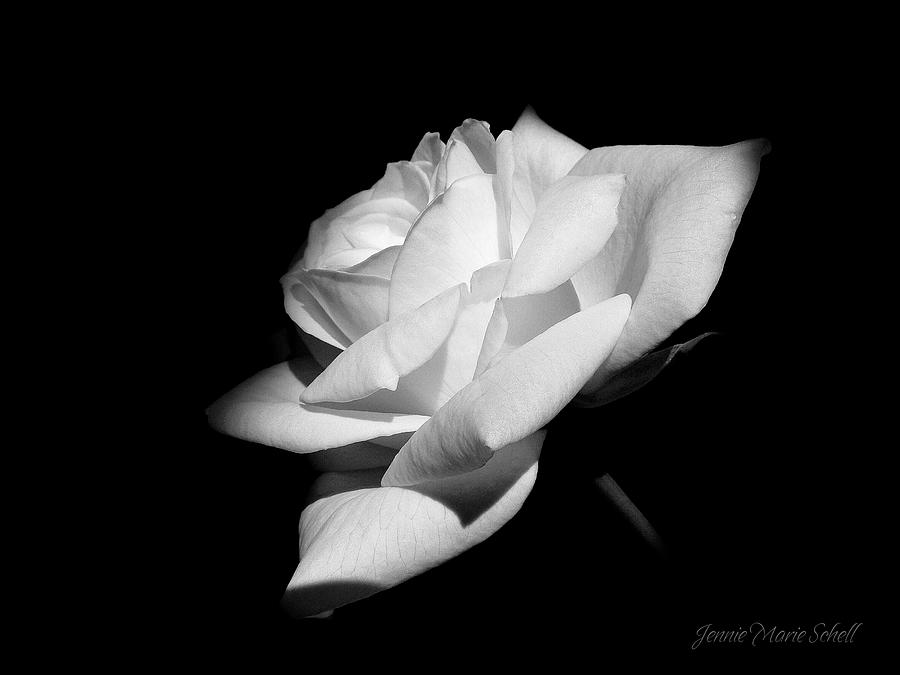 Rose Photograph - Light On Rose Black And White by Jennie Marie Schell