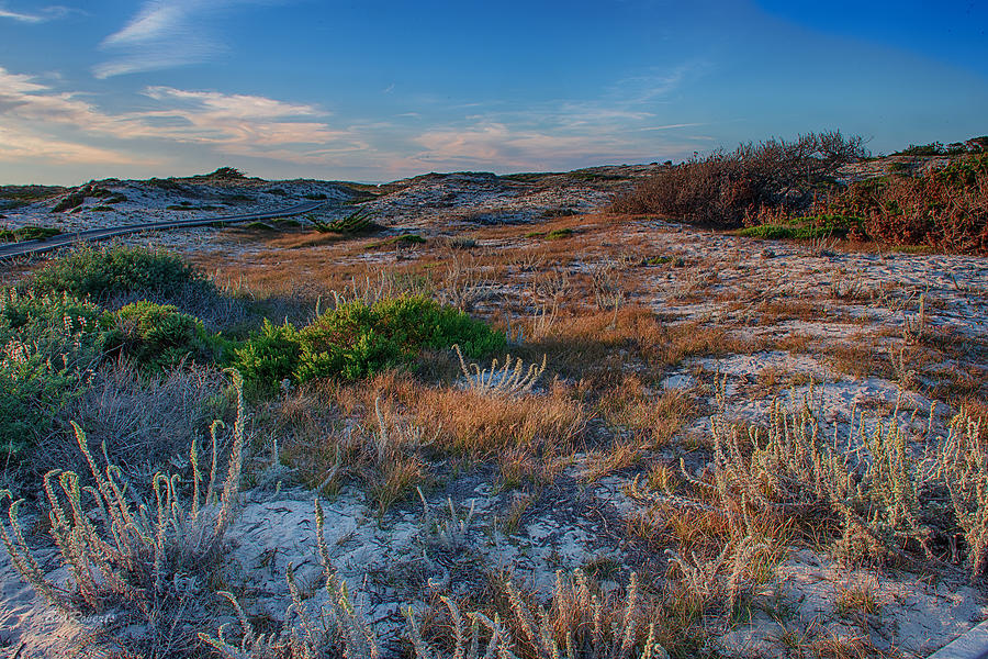 Asilomar Photograph - Light On The Dunes by Bill Roberts