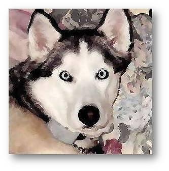 Dogs Photograph - Light On The Eyes by Brenda Garacci
