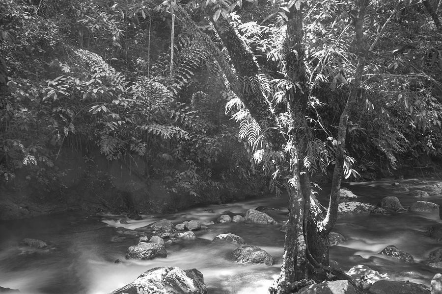 Riverside Photograph - Light On Tree by Paul Chong