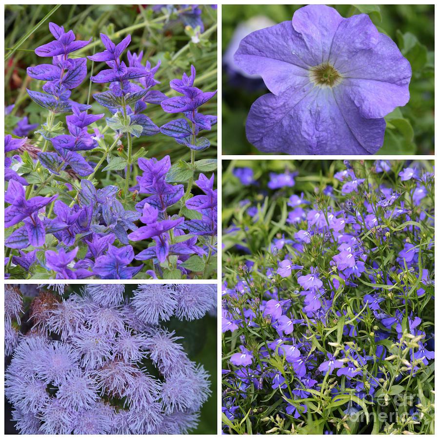 Light Purple Flowers Collage Photograph By Carol Groenen