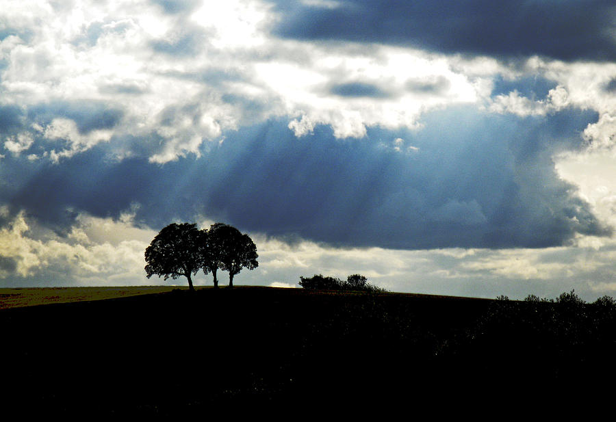 Trees Photograph - Light Rays by Margaret Hood
