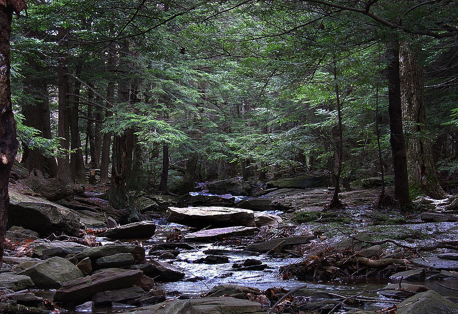 Greene County Photograph - Light Shimmering Through The Hemlock Canopy Of The Kaaterskill by Terrance DePietro