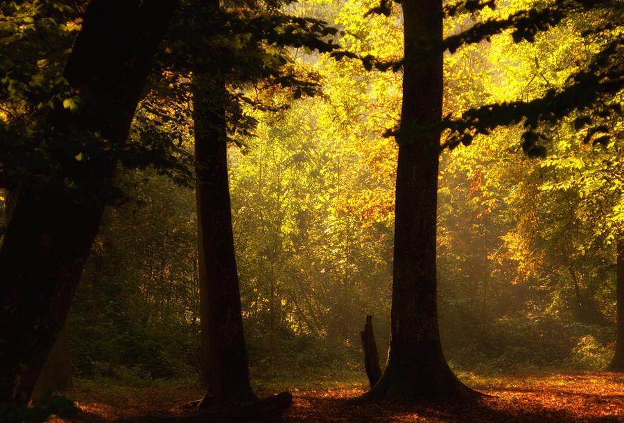 Wood Photograph - Light by Svetlana Peric
