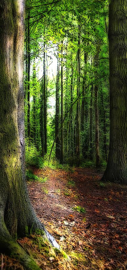 Trees Photograph - Light Through The Trees by Meirion Matthias