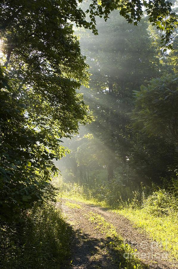 West Virginia Photograph - Light Unto My Path by Thomas R Fletcher