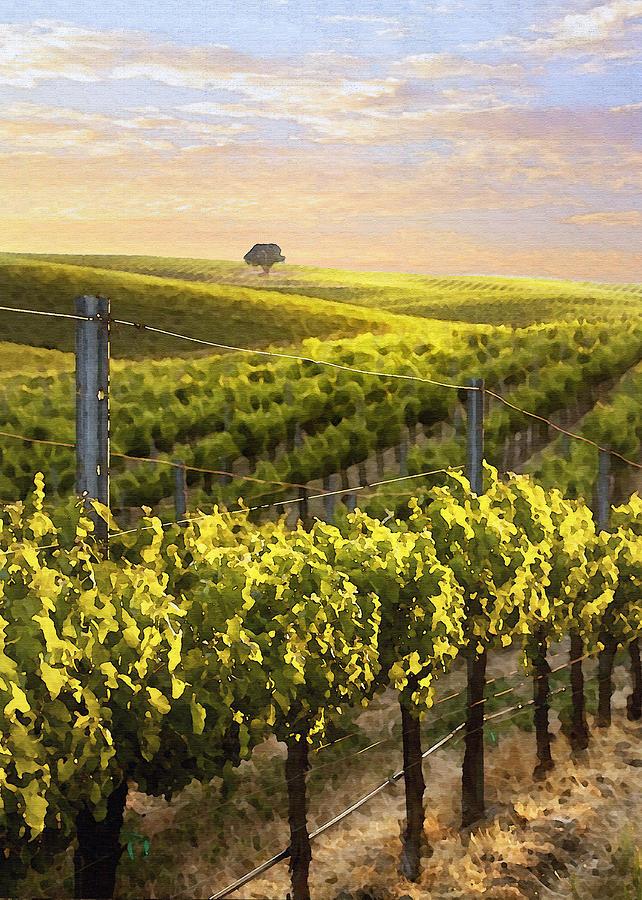 Vineyard Digital Art - Lighted Vineyard by Sharon Foster