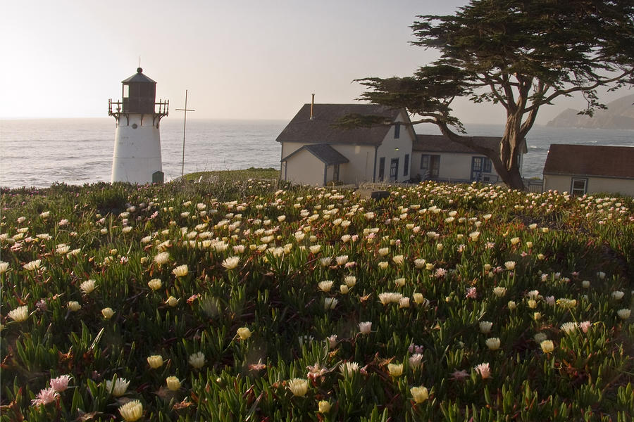 California Photograph - Lighthouse With A Blanket Of Wildflowers by George Oze