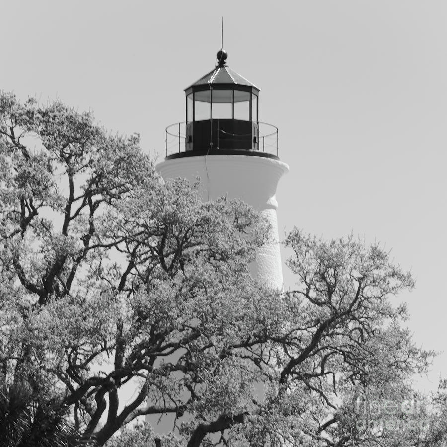 Lighthouse with oak tree branches black and white by carol groenen