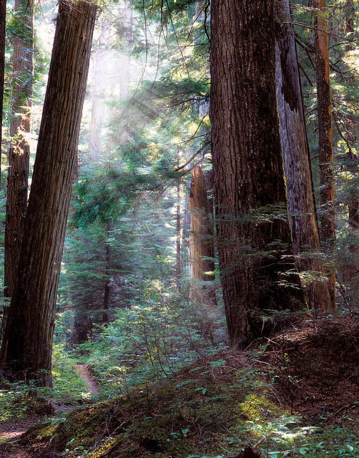 Forest Path Photograph - Lighting The Path by Leland D Howard