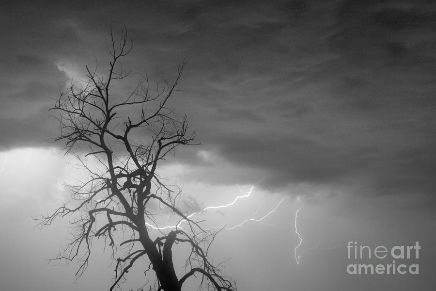 Lightning Tree Silhouette 29 In Black And White Photograph