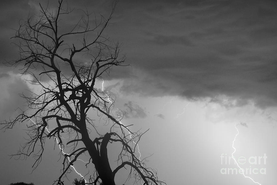 Lightning Tree Silhouette 38 Black And White Photograph