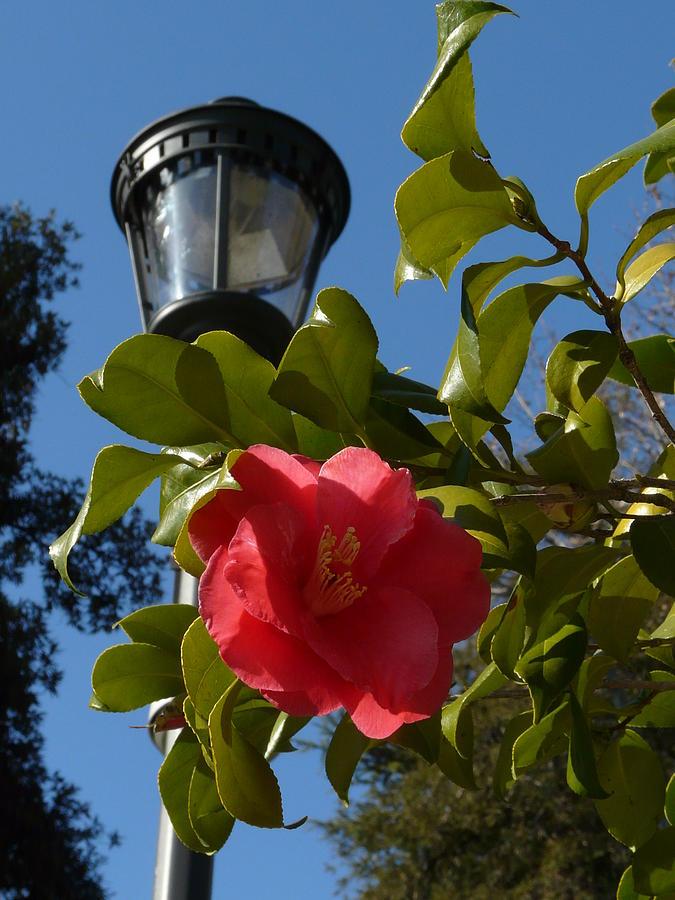 Floral Photograph - Lights by Attila Balazs