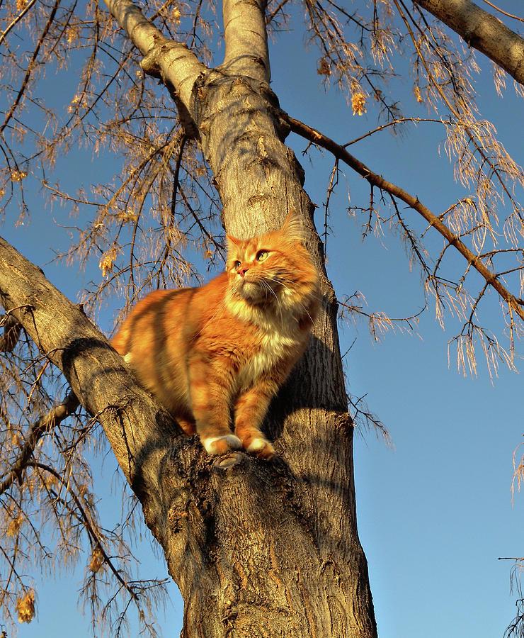 Cat Photograph - Like The Big Boys by ShaddowCat Arts - Sherry
