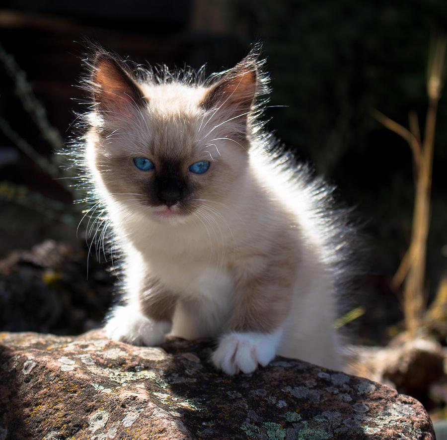 Lil Blue Eyes II Photograph