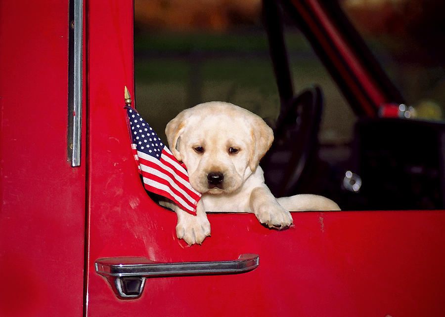 American Flag Photograph - Lil Lab Patriot 1 by Dale Hall