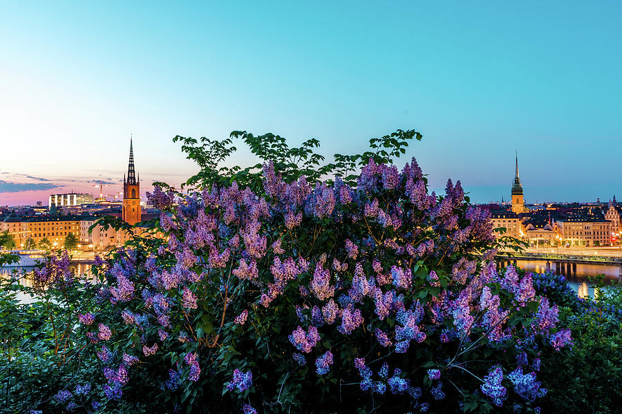 Lilac Photograph - Lilacs and Sunset to Blue Hour Transition over Gamla Stan in Stockholm by Dejan Kostic