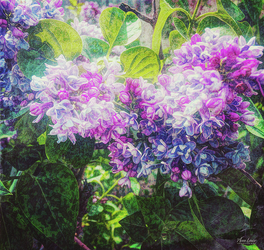 Lilacs Expression by Anna Louise