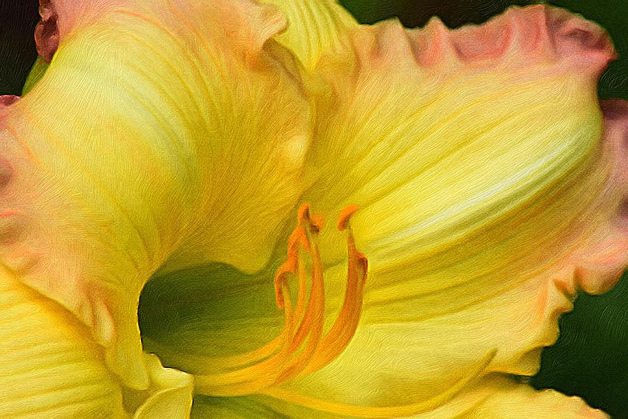 Brushstroke Photograph - Lilied Curves by Gregory Strong