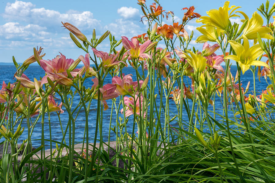 Day Photograph - Lilies At The Waterfront by Andrew Miles