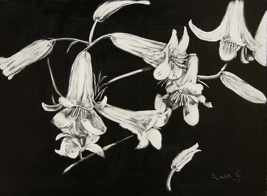 Lilies Black And White Drawing by Elizabeth Lane