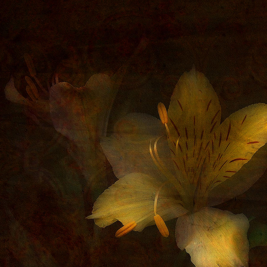 Mixed Media Photograph - Lilies II by Bonnie Bruno