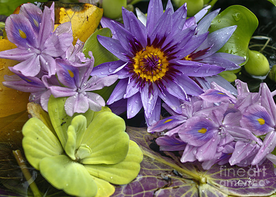 Blue Majestic Flower On Water Photograph - Lilies No. 38 by Anne Klar