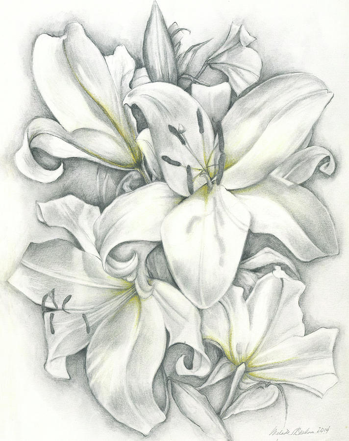 Lilies Pencil by Melinda Blackman