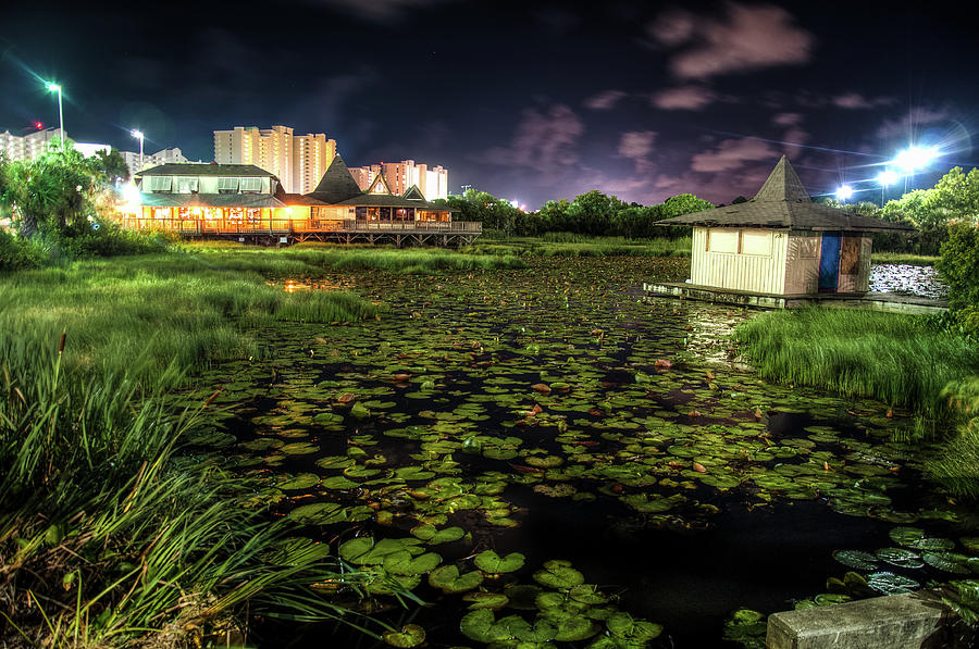 Lilly Pads on the Pond by Daryl Clark