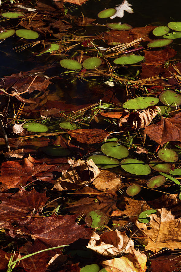 Lilly Pads by Rob Narwid