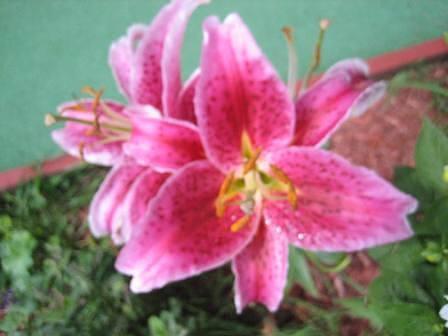 Flower Photograph - Lily 2 by Joanna Baker - Jenkins