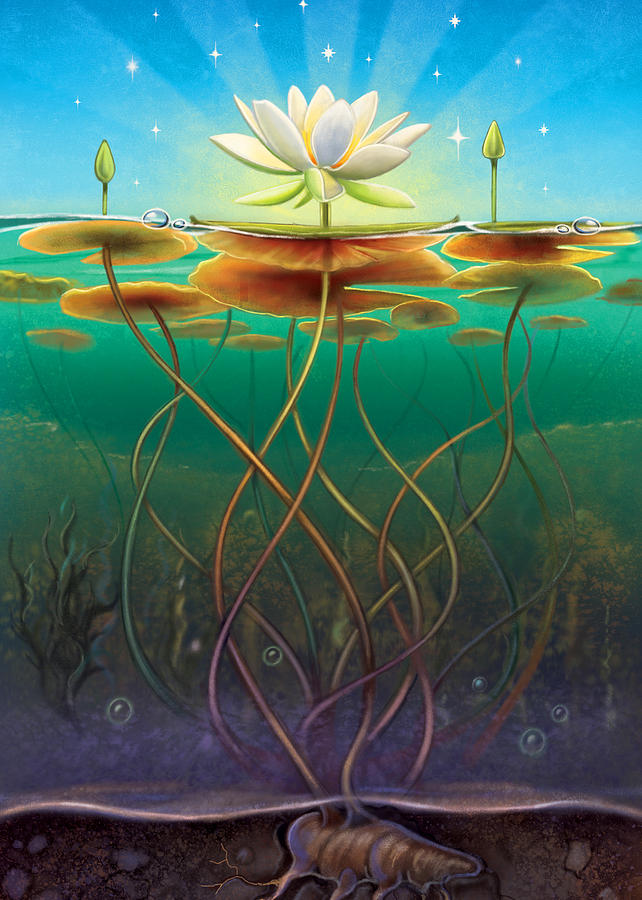 Water Lily Mixed Media - Water Lily - Transmute by Anne Wertheim