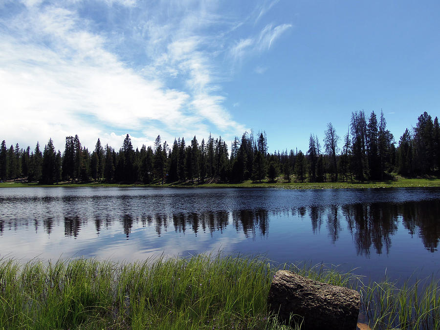 Lily Lake Photograph - Lily Lake by Julie Tanner