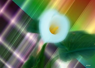 Lily Digital Art - Lily Love by Brenda Starr