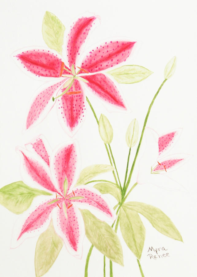 Lily Painting - Lily by Myra Dwyer
