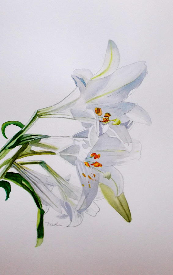 Lily Flower Painting - Lily by Nicole Curreri