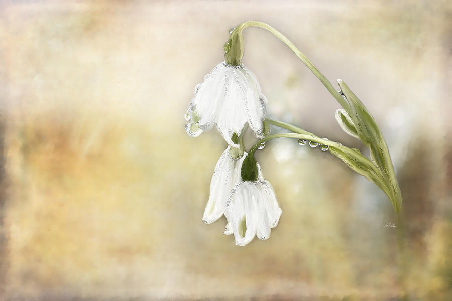 Lily Of The Valley Painting - Lily Of The Valley by Angela A Stanton