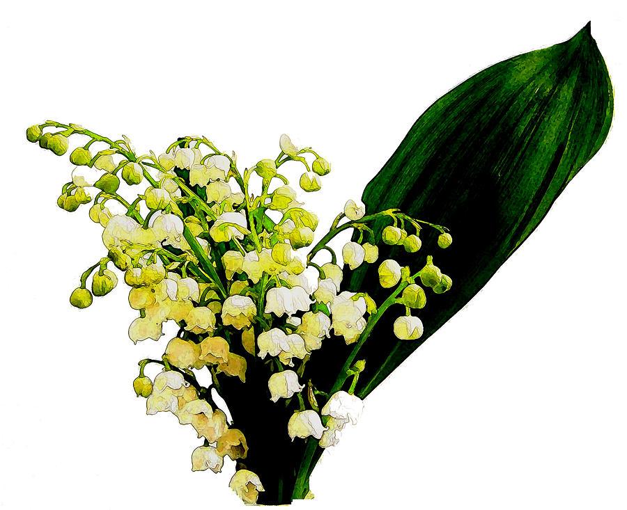 Flower Digital Art - Lily Of The Valley by Linda Tenenbaum