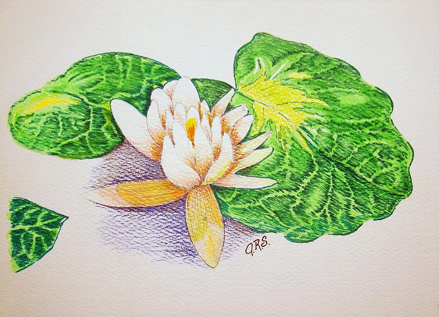 Lily Pad Drawing by J R Seymour