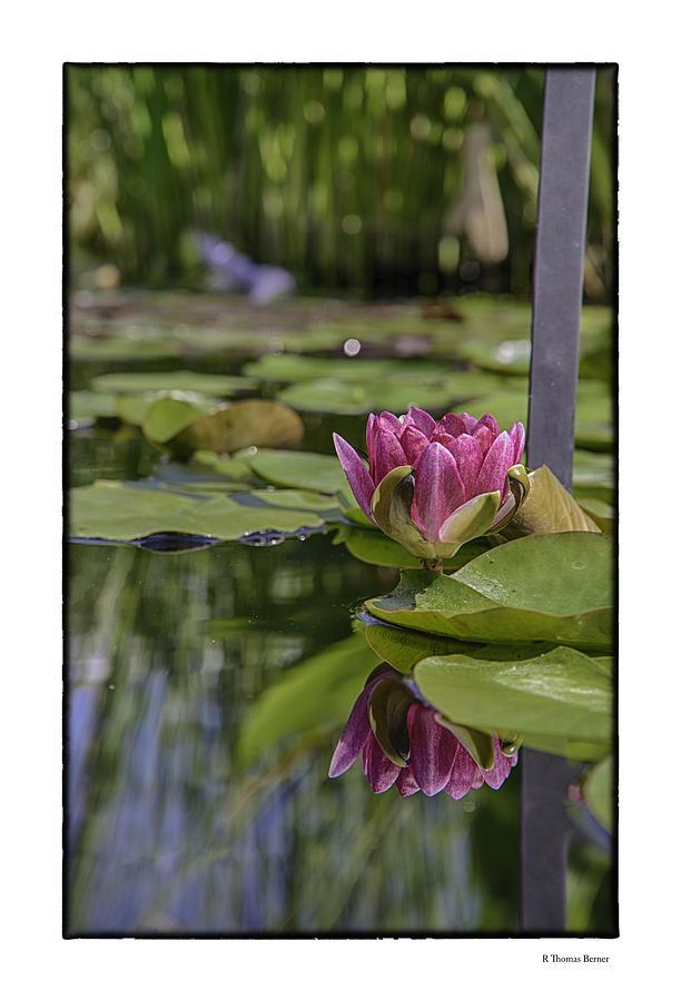 Lily Pad Photograph by R Thomas Berner