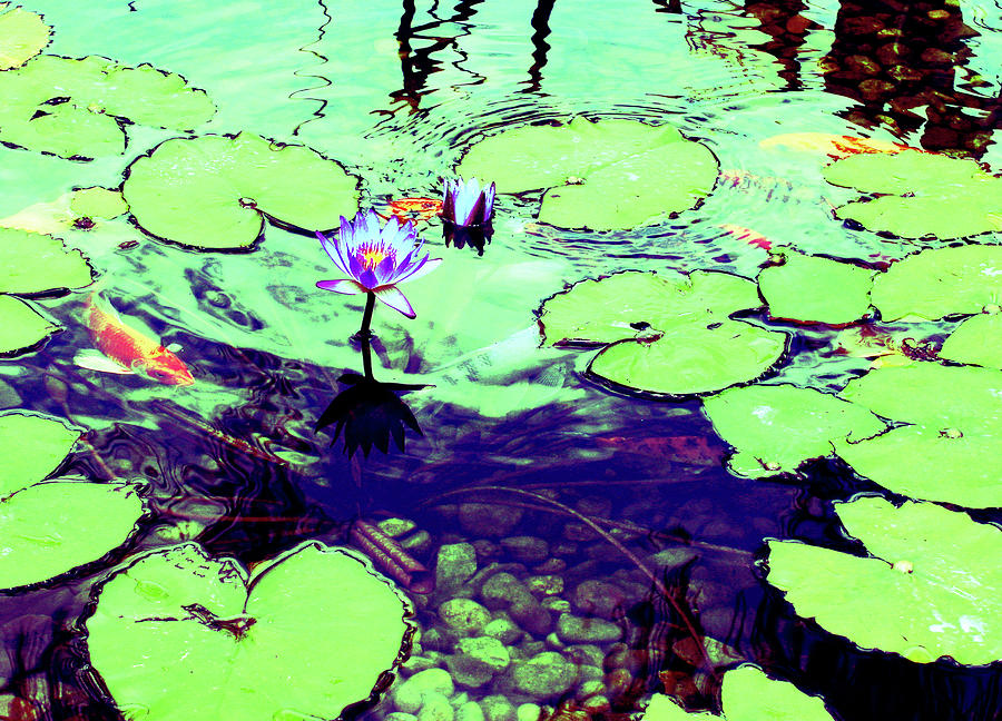 Pond Photograph - Lily Pads And Koi 2 by Gary Bartoloni
