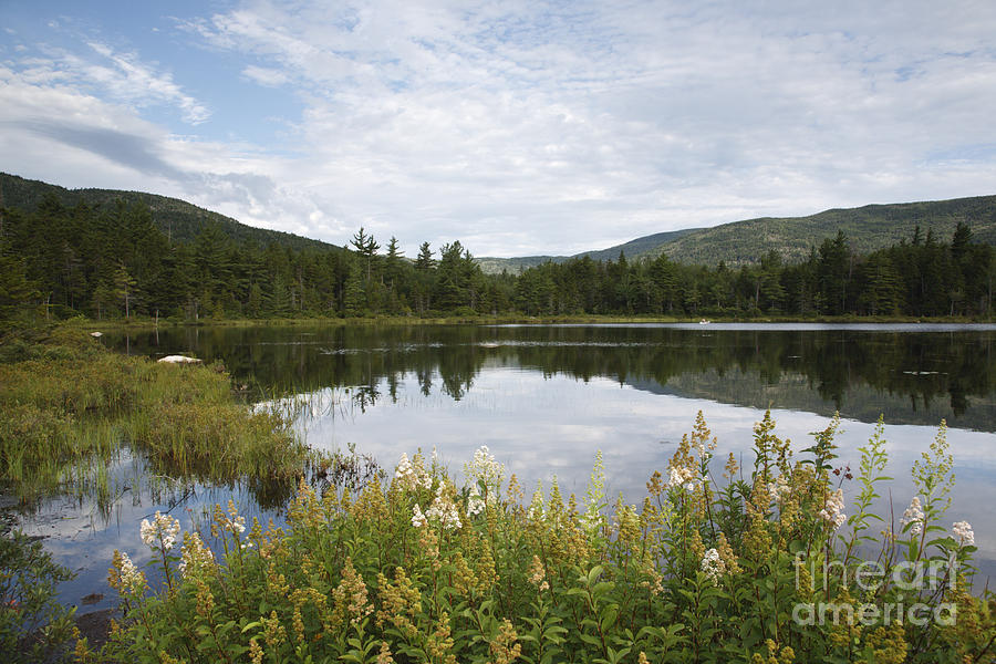 White Mountain National Forest Photograph - Lily Pond - White Mountains New Hampshire Usa by Erin Paul Donovan
