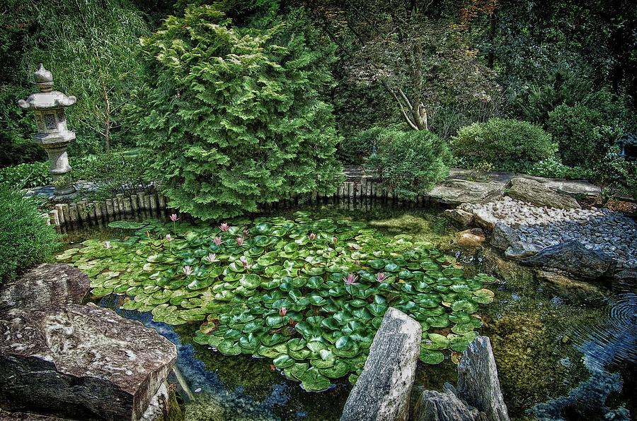 Lily Pond - Japanese Garden - Hillwood Estate Photograph by James ...