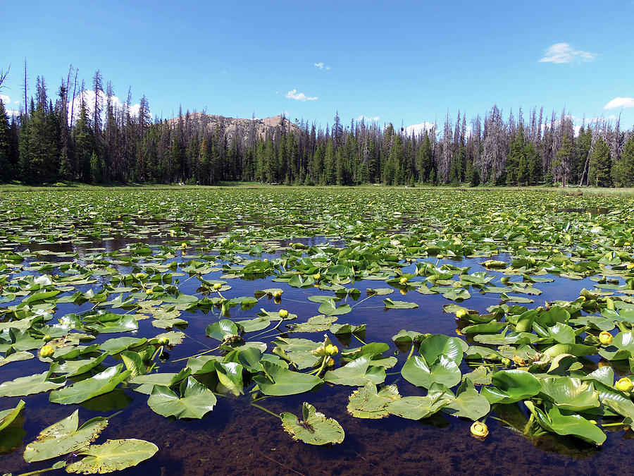 Utah Photograph - Lily Pond by Julie Tanner