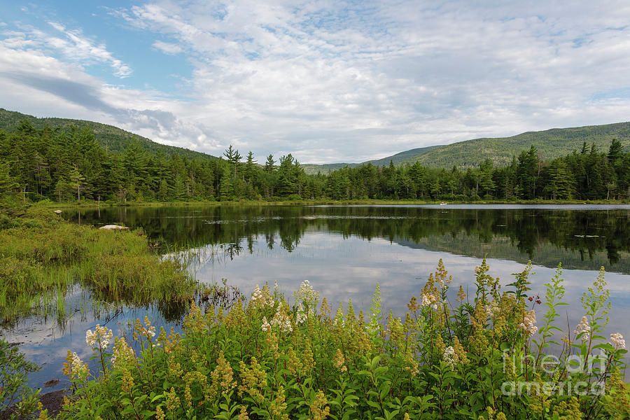 White Mountain National Forest Photograph - Lily Pond - White Mountains, New Hampshire by Erin Paul Donovan