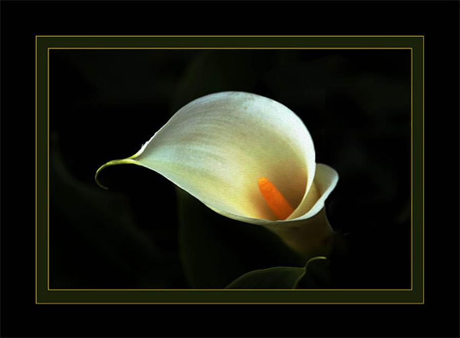 Flower Photograph - Lily by Richard Gordon