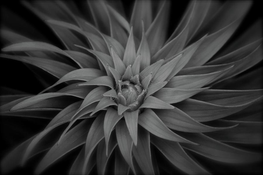 Lily Swirl by Melissa Lane